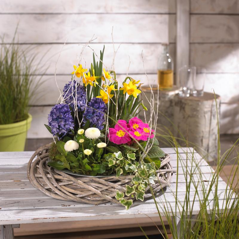 pflanzen und pflanzt pfe discount lampertheim archive edinger m rkte. Black Bedroom Furniture Sets. Home Design Ideas
