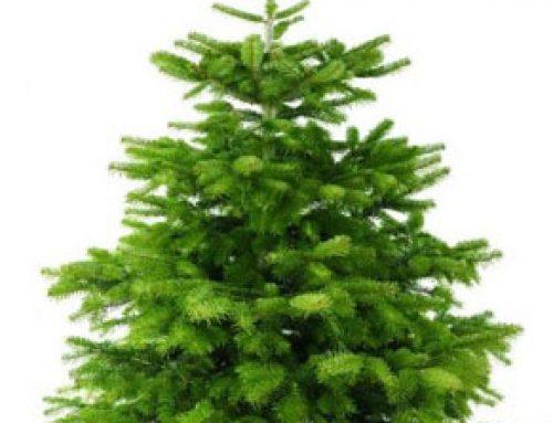 Weihnachtsbäume Christbäume aus dem Sauerland