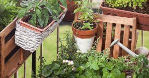Balkongarten /Urban Gardening